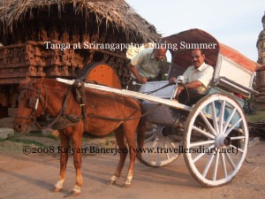 Summer Tanga Horse - Indian Spirit