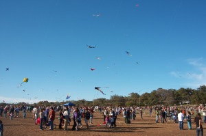 An army of Kites